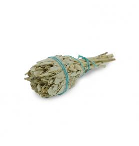 Antorcha Salvia Blanca California (Salvia Apiana)  de