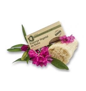 Esponja vegetal grande de luffa, Iberica de Esponjas (7,5x15cm)  de Ibérica de esponjas vegetales S.L.